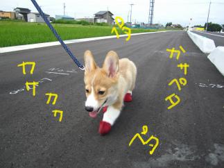 PAWZを履いた犬