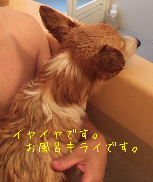 しめじ 一緒にお風呂