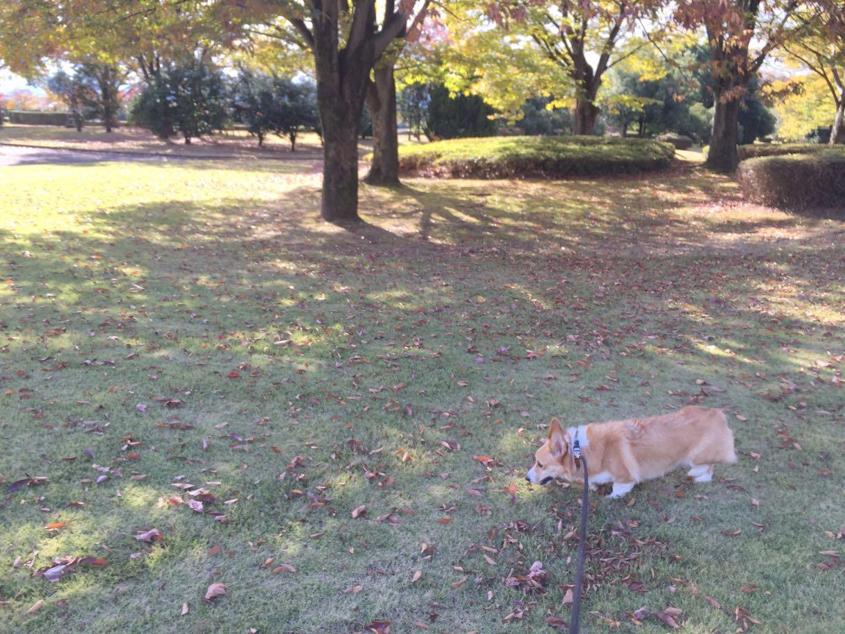 富山南総合公園