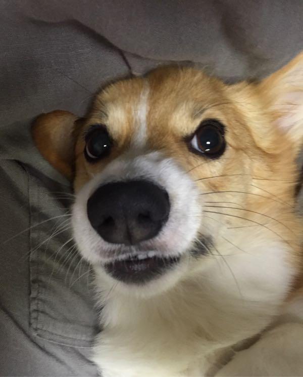 しめじ 歯みがき