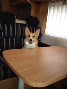 バーストナーのイスに座るしめじ