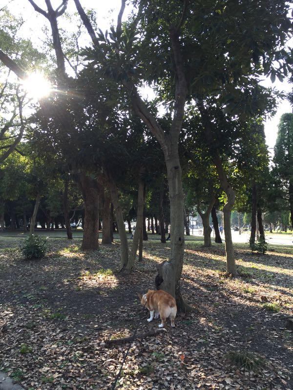 しめじ 大阪城公園
