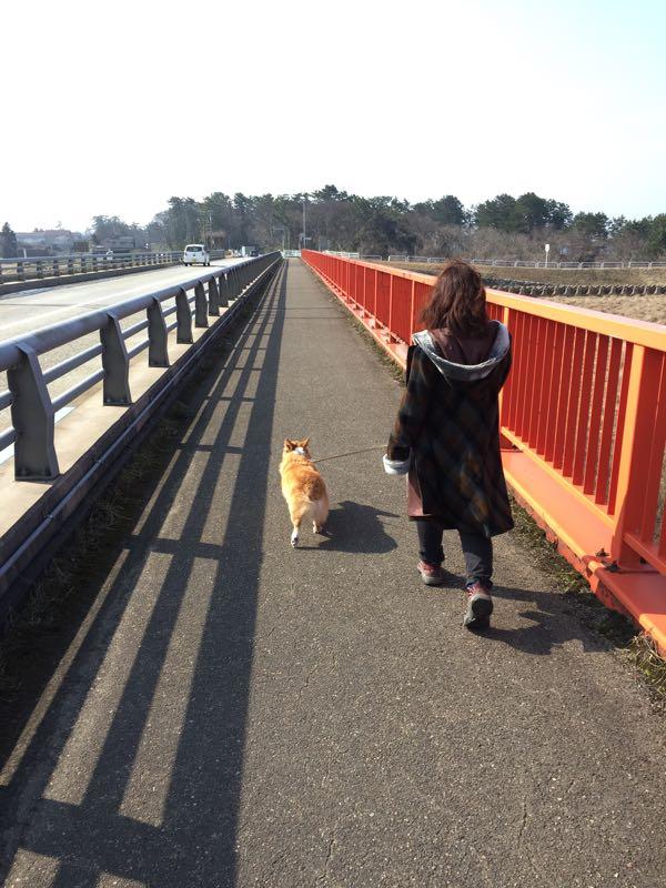 常願寺川を歩くしめじ