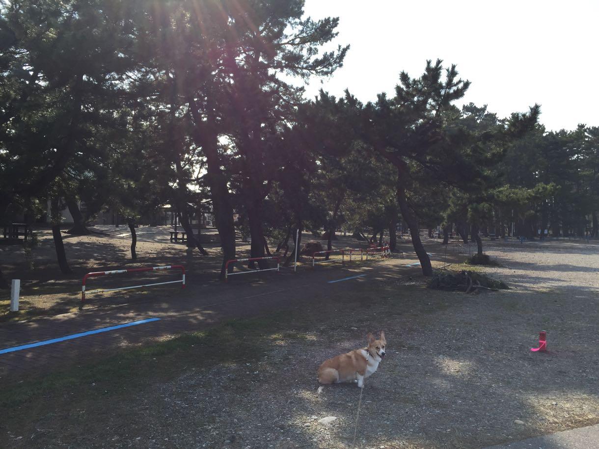 浜黒崎キャンプ場