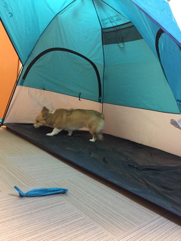 しめじとテント
