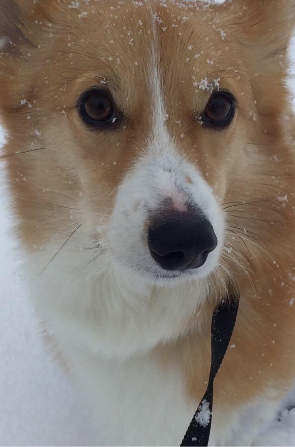 しめじと雪