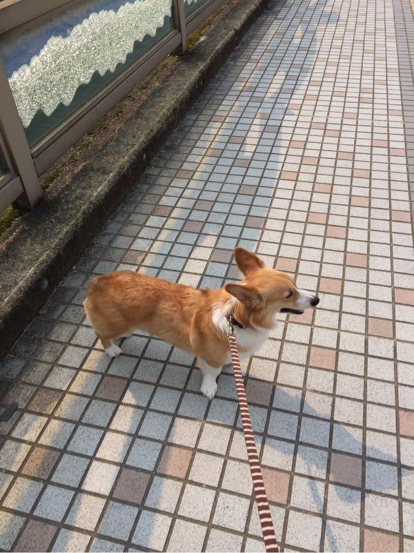 しめじと松川散歩