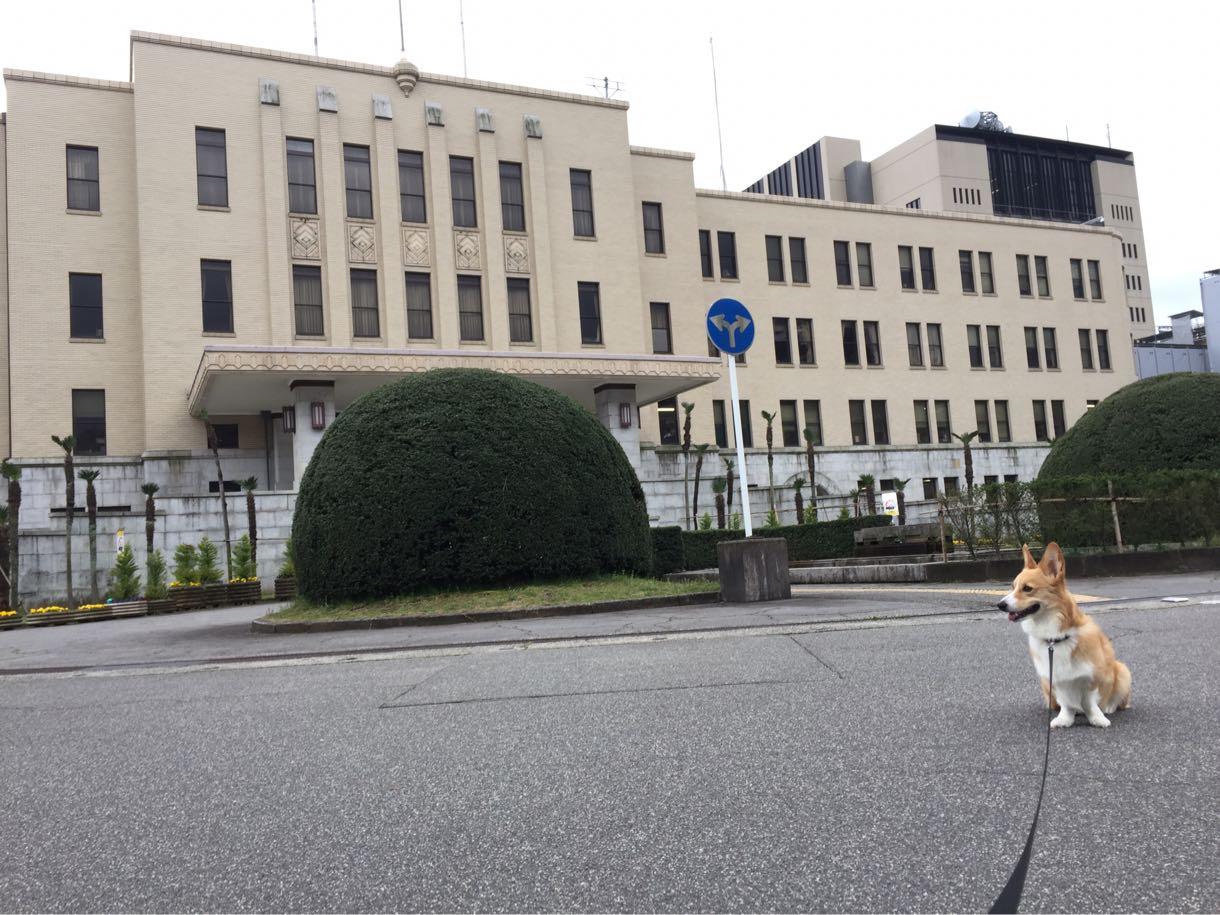 しめじと富山県庁