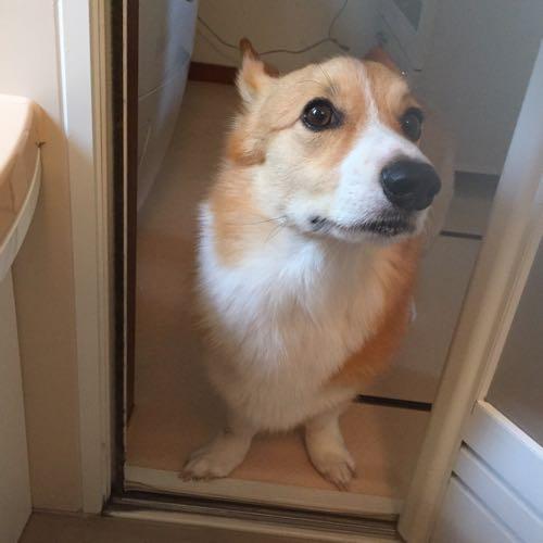 しめじ監督に監視されながらシャワーを浴びる