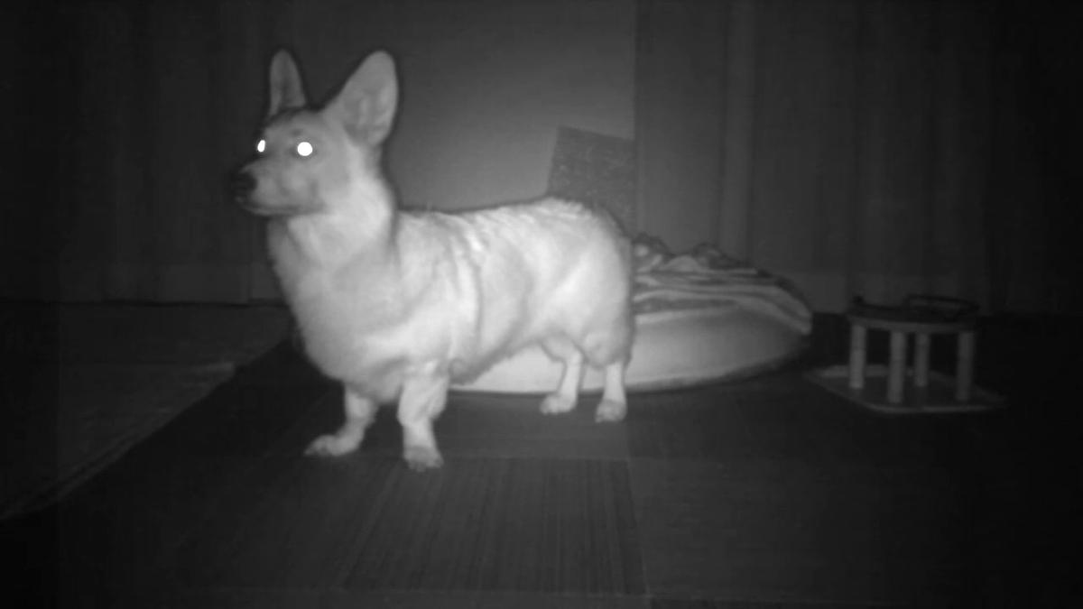 モトローラの見守りカメラ