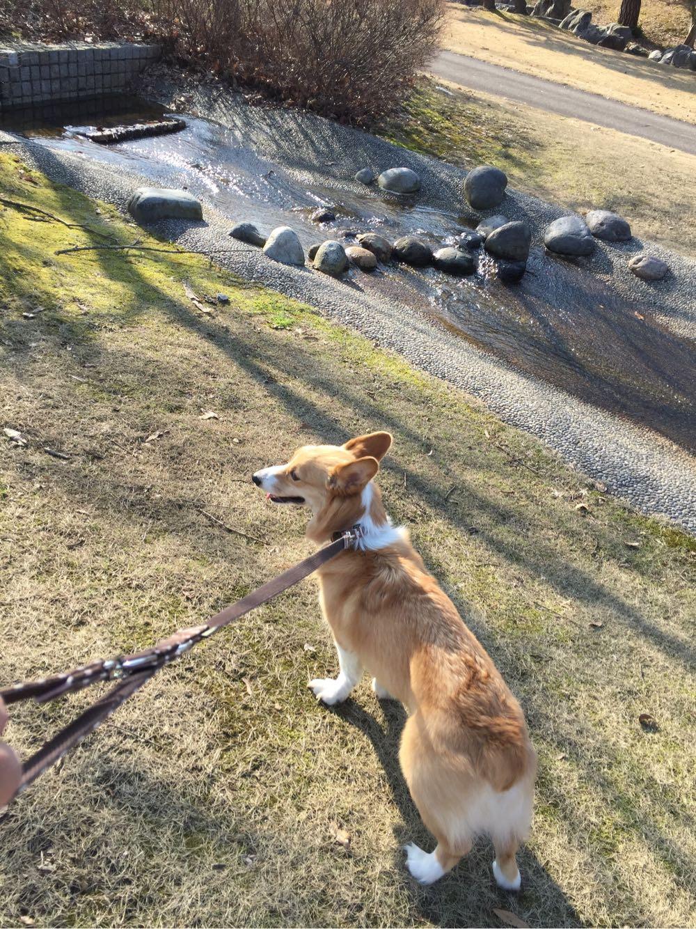 太閤山ランド お散歩