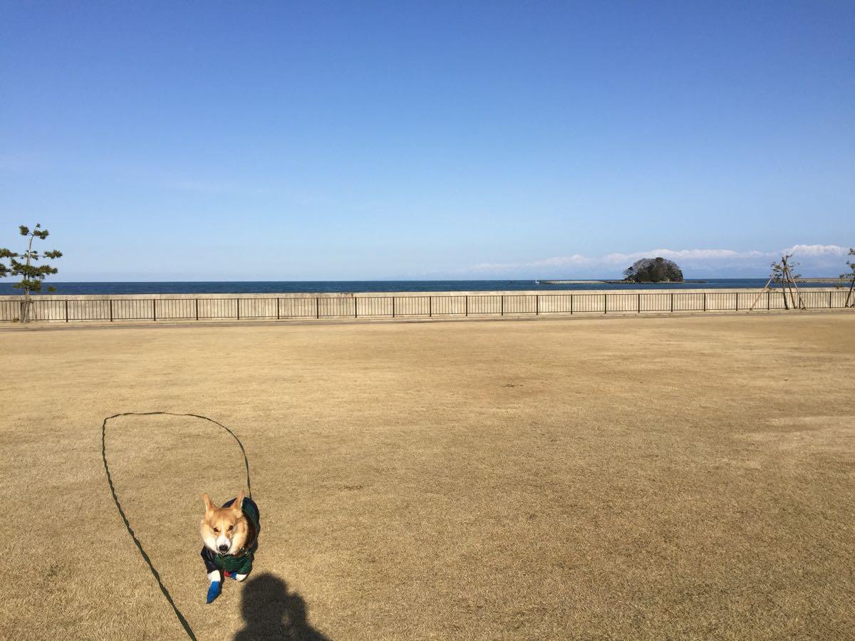 比美乃江公園でしめじと遊ぶ