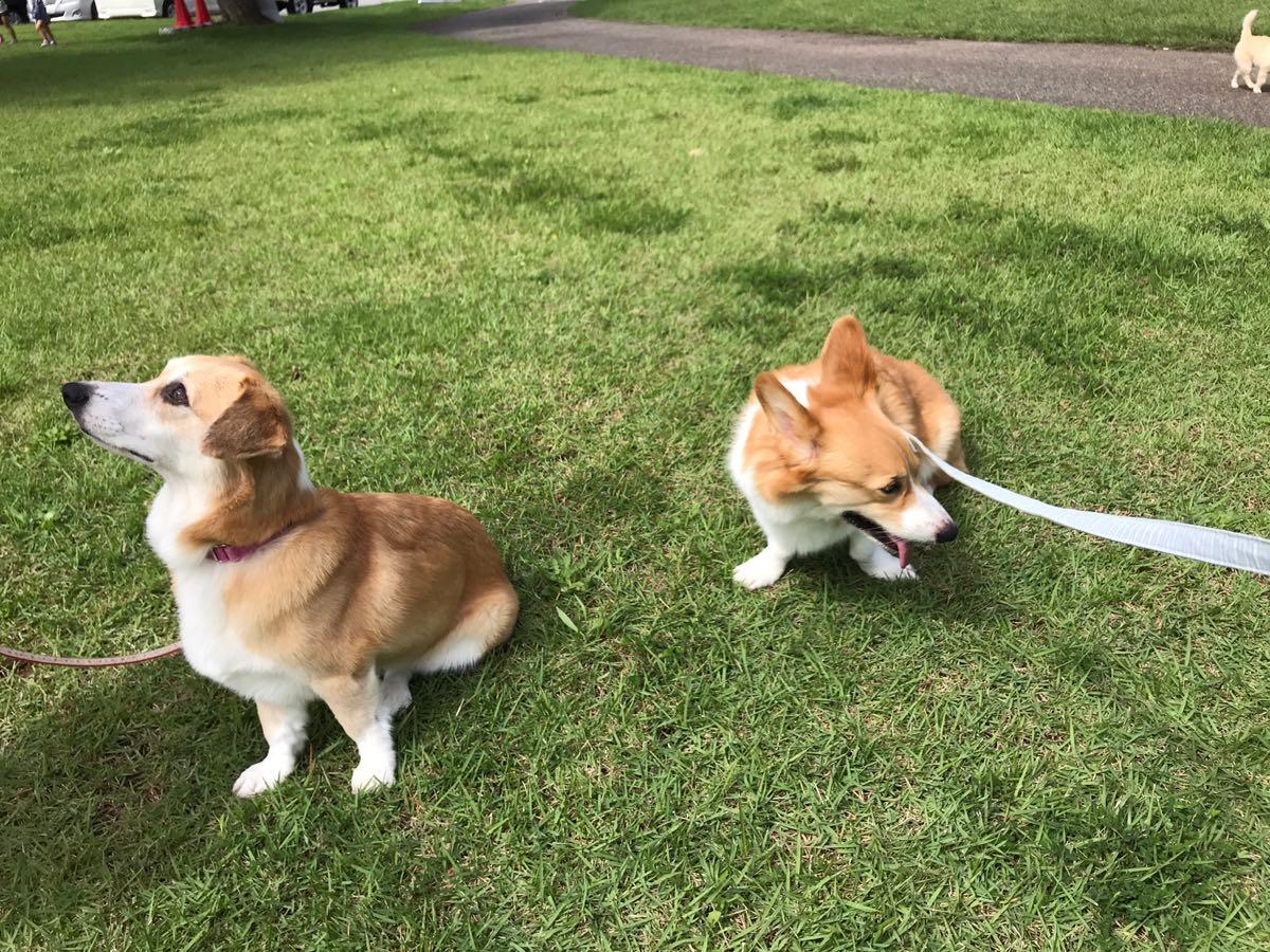 動物愛護フェスティバルでペット同伴災害訓練