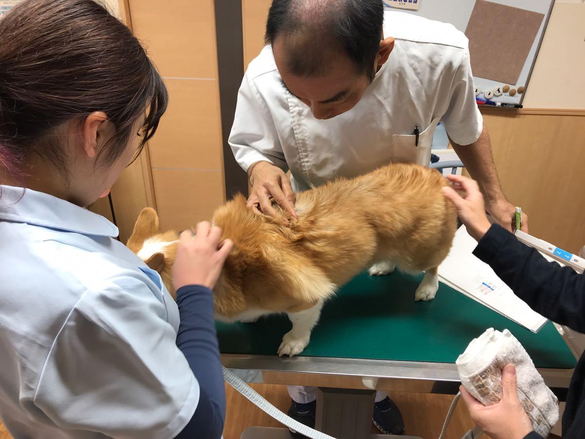 しんめい動物病院で診察