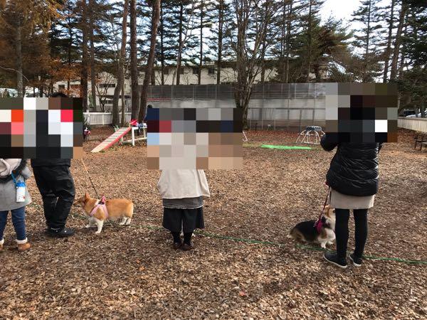 軽井沢DOG DEPTでコーギーパーティー(オフ会)