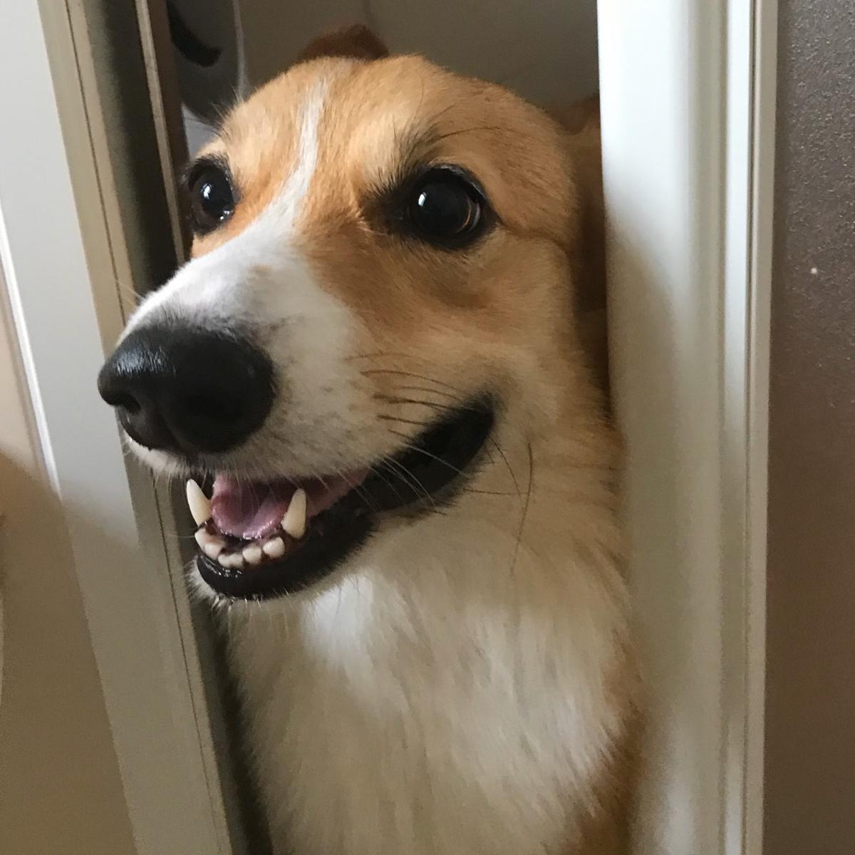 お風呂をのぞく犬